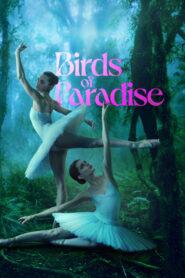 Aves del paraiso 109255 poster.jpg